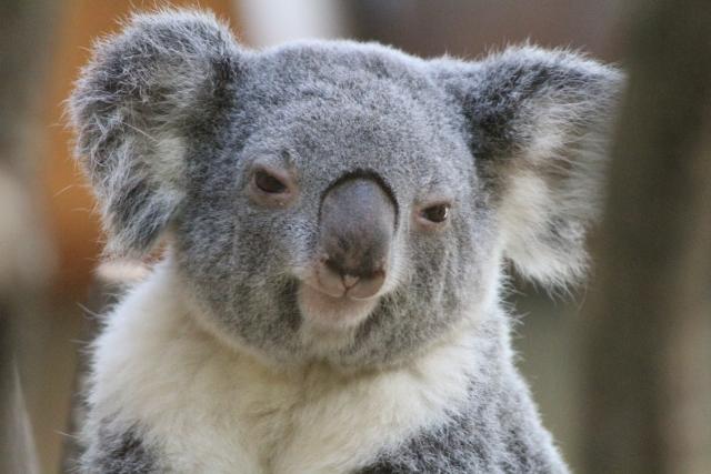 オーストラリア英語は訛ってる?実際に留学してみると・・・